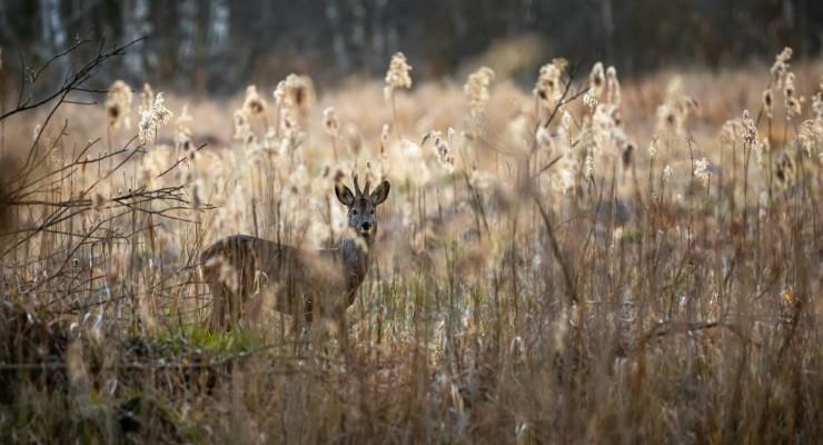 Details deer